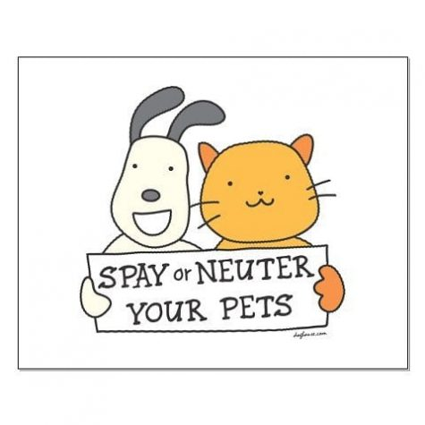 Spaying And Neutering Is Important