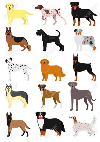 Personal Opinion: Dog Breed Discrimination